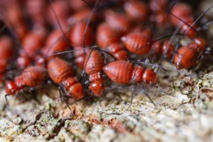 Signs you might have Termites
